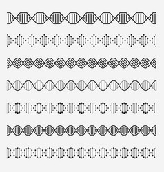 Dna elements helix double chromosomes model vector