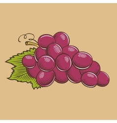 Grapes in vintage style Colored vector image