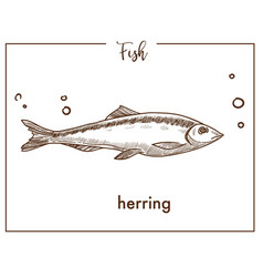 Herring sketch fish icon vector