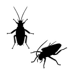 Silhouette of cockroach icon of insect vector