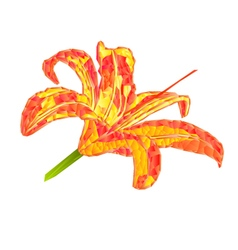 Spring flower Lily Daylily polygons vector