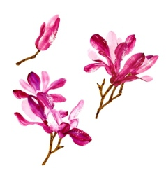 Set of red watercolor magnolia flowers vector