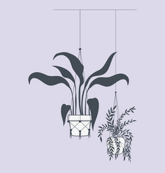 houseplants in macrame hangers vector image