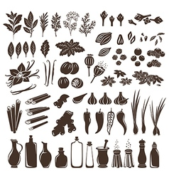 Set of spices vector image