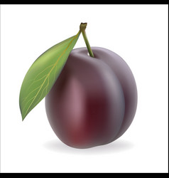 plum on a white background vector image