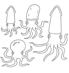 set of squids vector image