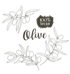 sketch of olive tree branch vector image