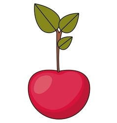Cherry fruit food design vector image