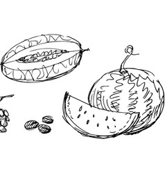 Drawn fruit vector