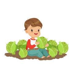 cute little boy playing with cabbage in the garden vector image