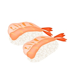 Ebi Sushi or Shrimp Nigiri on White Background vector