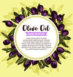 olive oil product olives sketch poster vector image
