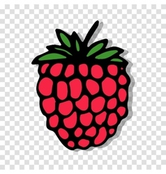 Raspberry sketch on transparent background for vector image