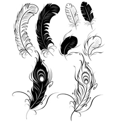silhouettes of feathers vector image