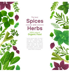 spices and herbs basil mint spinach coriander vector image