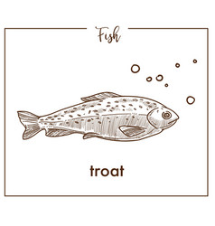 Trout sketch fish icon of salmon vector