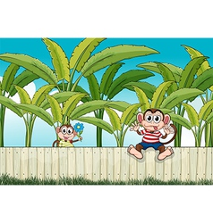 Two monkeys playing at the fence vector image vector image