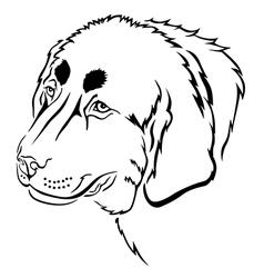 tibetan mastiff vector image vector image
