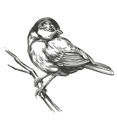 bird titmouse on a branch hand drawn vector image