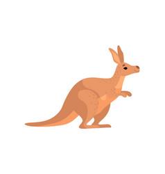 Brown kangaroo cute wallaaustralian animal vector