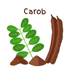 Carob pods beans powder leaves superfood vector