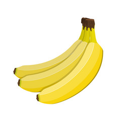 Bunch of bananas isolated on white vector