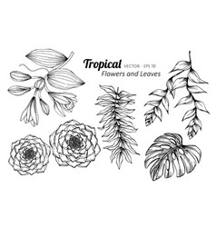 collection set of tropical flower and leaves vector image
