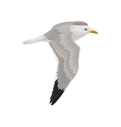 seagull flying in the sky gray and white sea bird vector image
