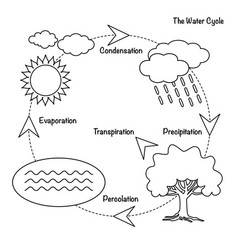 the water cycle vector image
