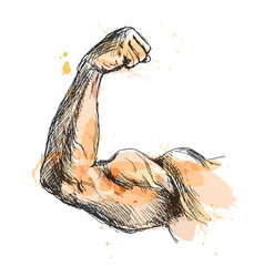 colored hand sketch biceps vector image