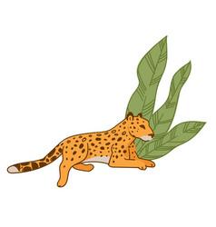 Leopard or cheetah resting under wide leaves flora vector