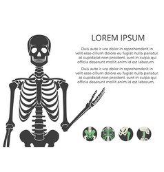 medicinal poster or banner with human skeletone vector image