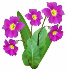 purple flowers vector image