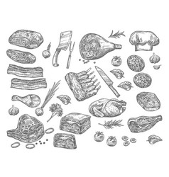 sketch icons of meat for butchery shop vector image