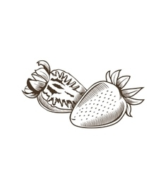 Strawberry in vintage style Line art vector