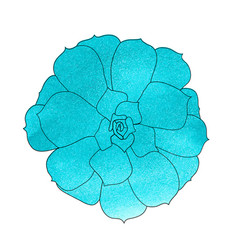 Succulent plant echeveria watercolor top view vector