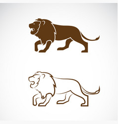 male lion design on white background wild vector image vector image