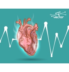 Human heart beat vector
