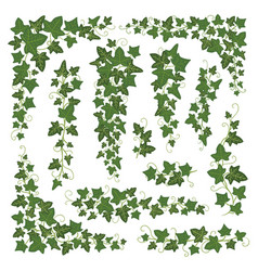 Ivy branches green set vector