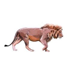 portrait a lion head from a splash vector image