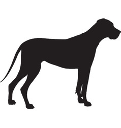 Great dane silhouette vector