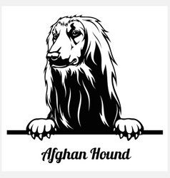 Afghan hound - peeking dogs - breed face head vector