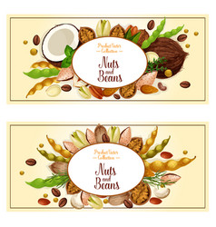 Banners of nuts and fruit kernels vector