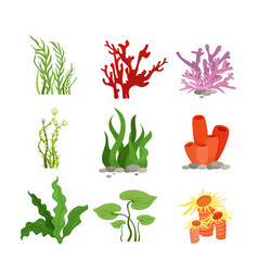 Set colourful water plants vector