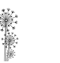 hand drawn black silhouette three dandelion on a vector image