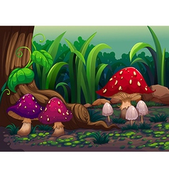 Giant mushrooms in the forest vector image