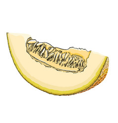 a hand-drawn sketch of a cut melon in color vector image