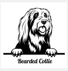 Bearded collie - peeking dogs - breed face head vector