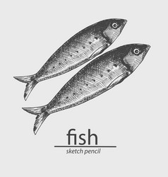 fish a marine resident animal sketch style vector image