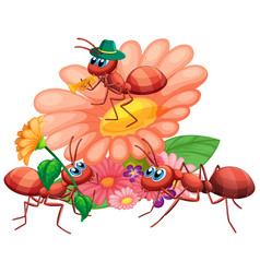 Group ants and flowers vector